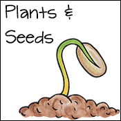 plants & seed activities