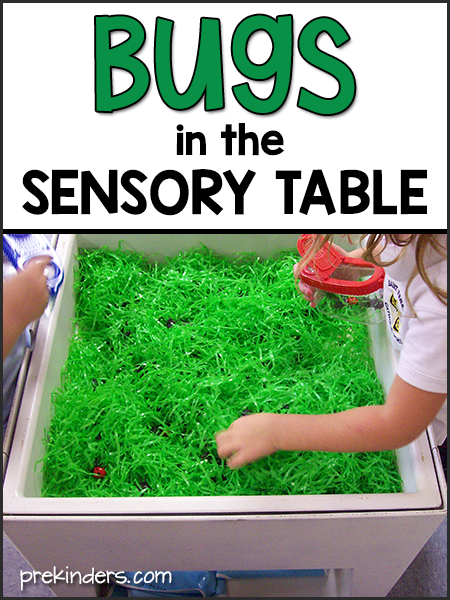 Bugs in the Sensory Table