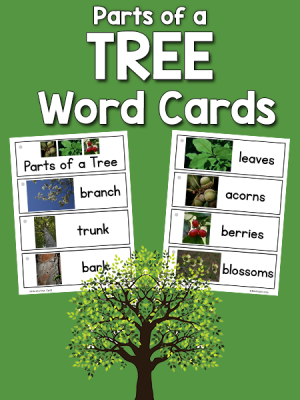 Parts of a Tree Picture-Word Cards
