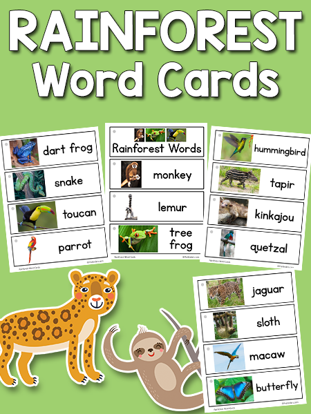Rainforest Word Cards