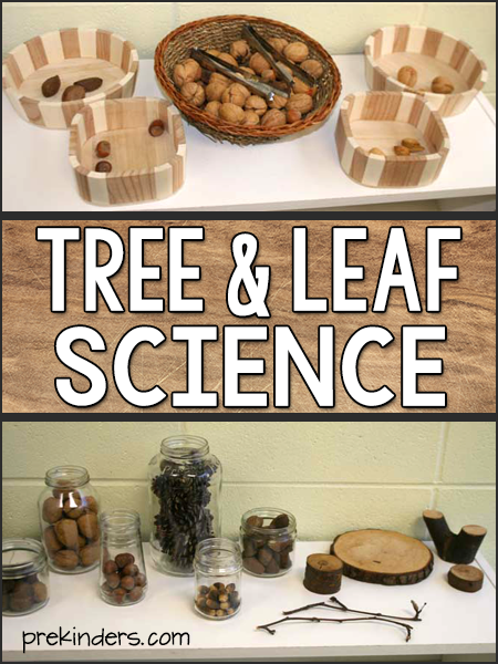 Tree Leaf Science Activities Preschool Pre-K